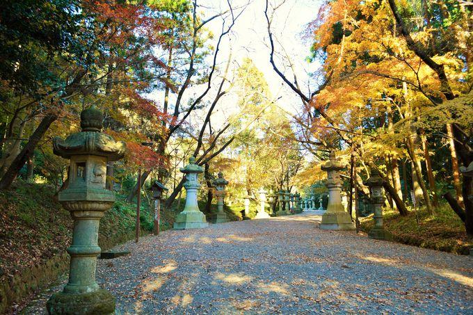 石灯籠の参道を通り、森厳な境内へ