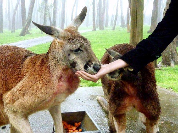 コアラをぎゅっと抱きしめたい!