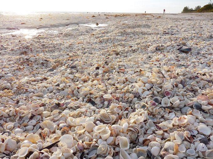 フロリダ州サニベル島「サンセットビーチイン」は美しすぎるシェルビーチが目前!