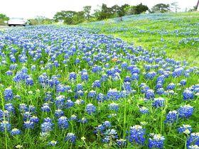 春がき〜たテキサスに来た!米ヒューストン花の観光名所7選