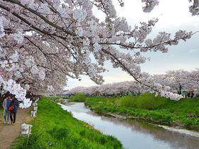 桜の名所や恋愛のパワースポットも!埼玉県朝霞市観光地6選
