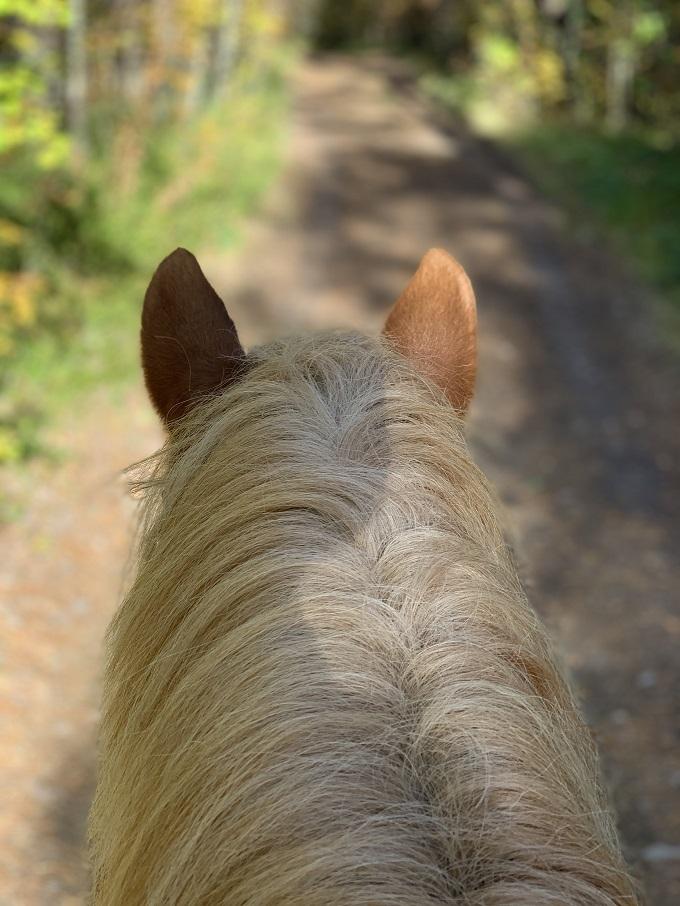 午後:川ぞいの森を馬上から散策しよう