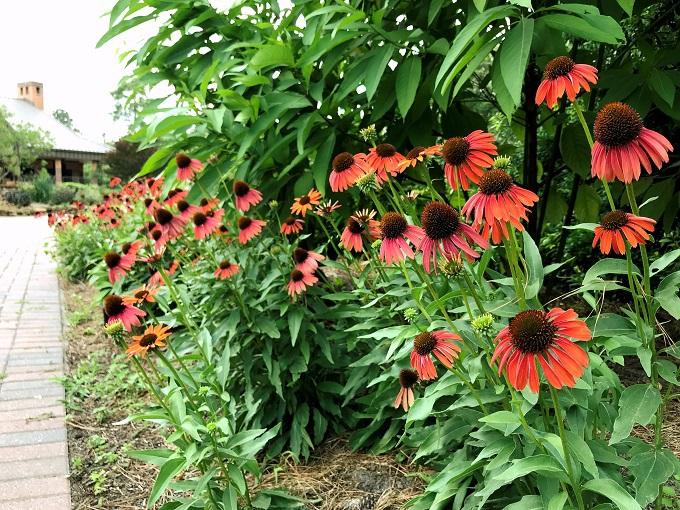 午後:四季折々の花園で芳香に酔いしれる