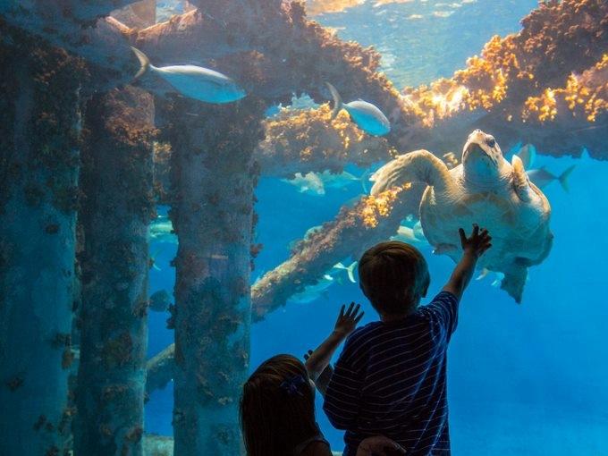州最大「テキサス州立水族館」で海中散歩はいかが?