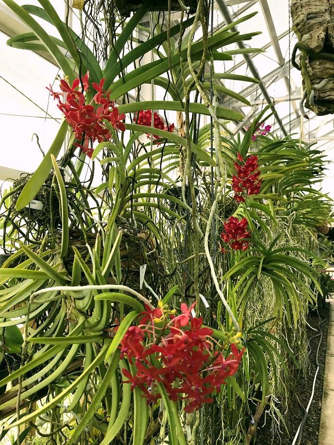 原住民も愛でた花園「サウステキサス植物園&自然センター」