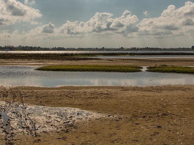 公園:パノラマに広がる湿地帯でバードウォッチングはいかが?