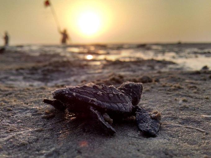 パドレ島国立海岸:子ガメの産卵風景は感動必至!