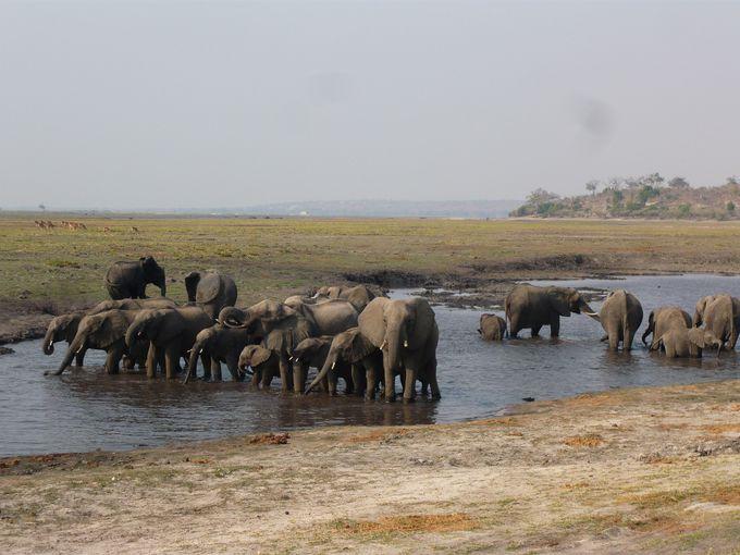 アフリカゾウの生息密度は世界一!