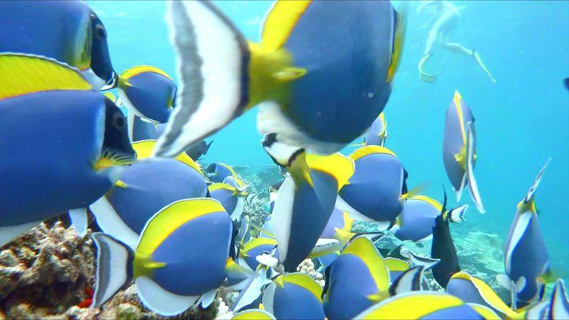 コスパ最高!モルディブ南アリ環礁「ヴァカルファリアイランドリゾート」