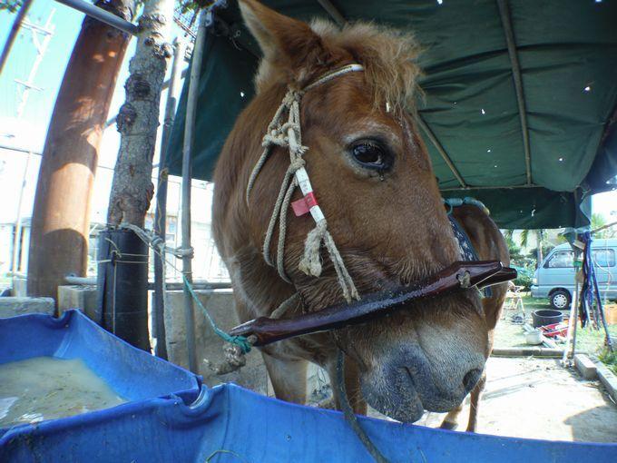 乗馬体験でお世話になる馬はハッピーです