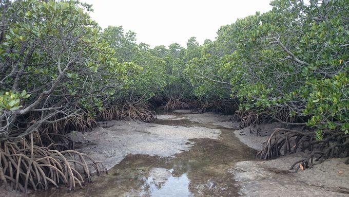 干潮時間で楽しむジャングル探検がおすすめです。