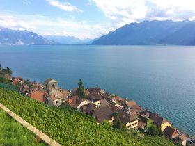 世界遺産!スイス、レマン湖沿い「ラヴォーのワイン畑」