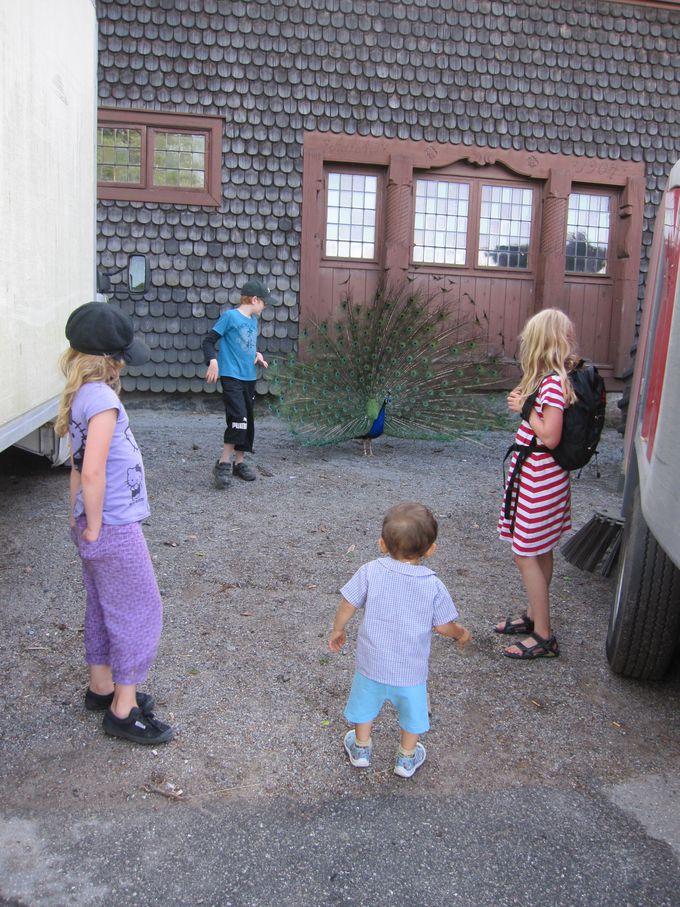 北欧に生息する動物たくさんいる併設されたスカンセン動物園