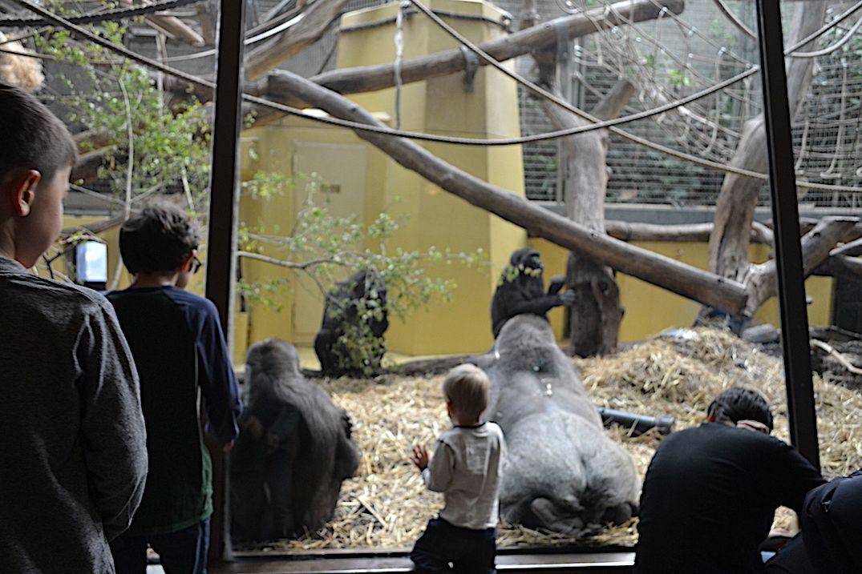世界の動物が楽しく暮らすチューリッヒ動物園