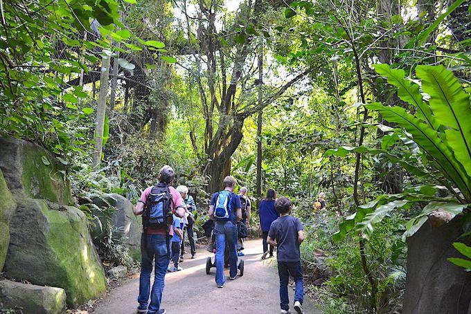 マダガスカルの熱帯雨林施設「マソアラ熱帯雨林」