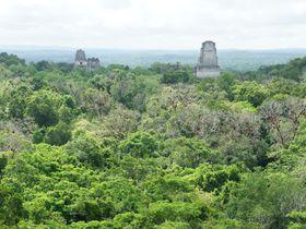 スター・ウォーズファン必見!「ティカル遺跡」グアテマラの世界遺産