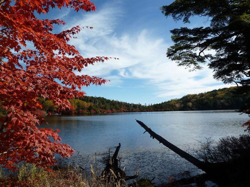 信州の秋!八ヶ岳の山麓で紅葉とアルプスの絶景を楽しもう