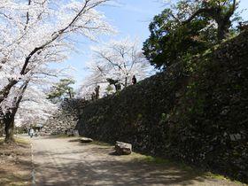 日本さくら名所100選!小諸「懐古園」楽しむ春の絶景