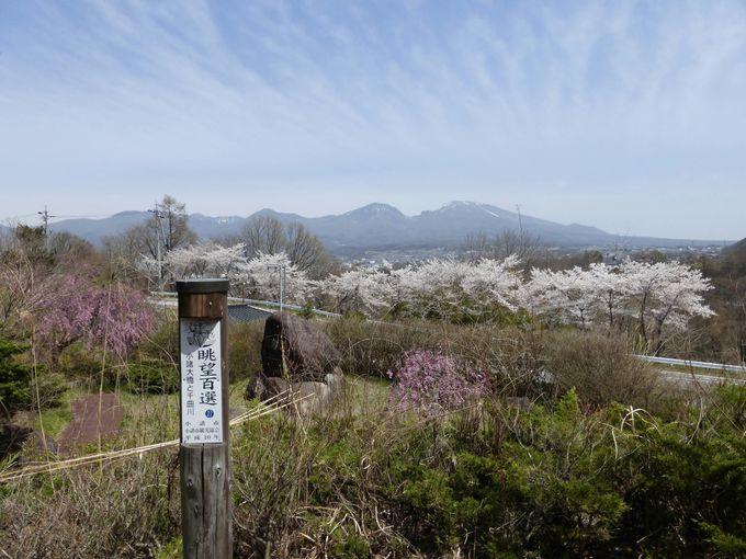 これぞ信州の絶景!!浅間山と満開の桜のコラボ!「小諸大橋公園」