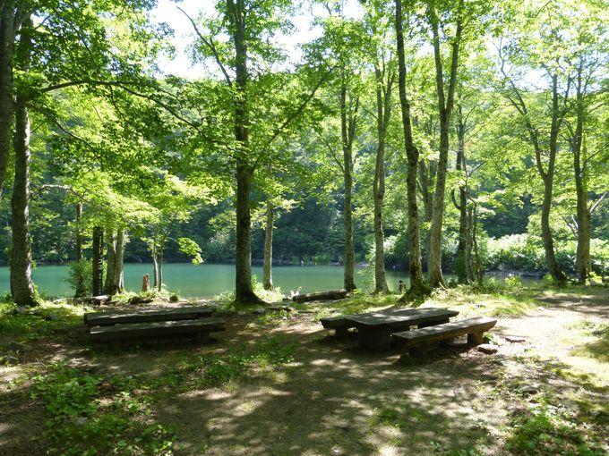 エメラルドグリーンに輝く湖面が美しい「ドッコ沼」!