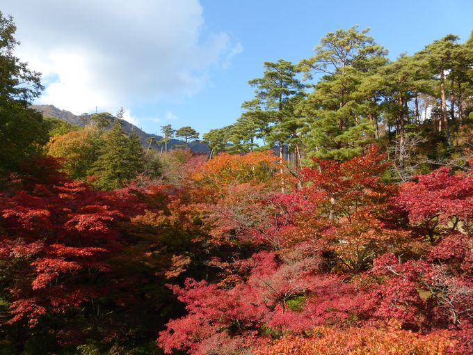 園内随一の紅葉の絶景スポット!弥彦公園もみじ谷