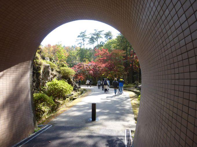 弥彦公園もう1つのイチオシ撮影スポット!紅葉とトンネルの絶景