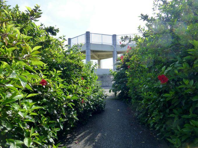 海に架かる池間大橋の様子もバッチリ!西平安名崎の展望台