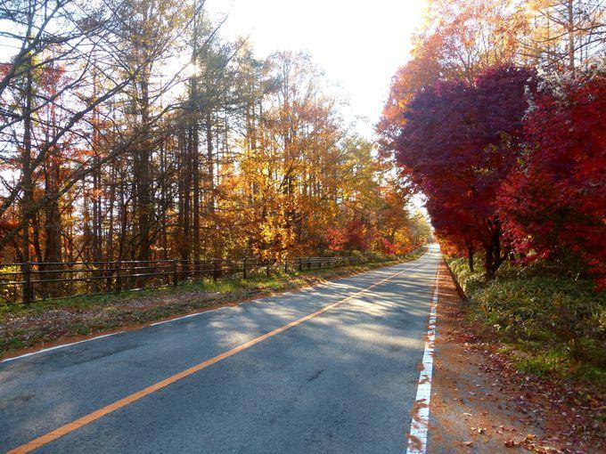 美しい八ヶ岳の秋を彩るドライブロード!八ヶ岳高原ライン