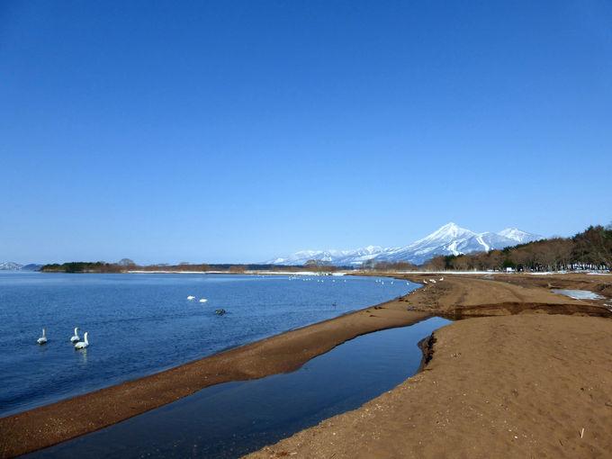 沢山の白鳥とともに眺める冬の磐梯山!志田浜