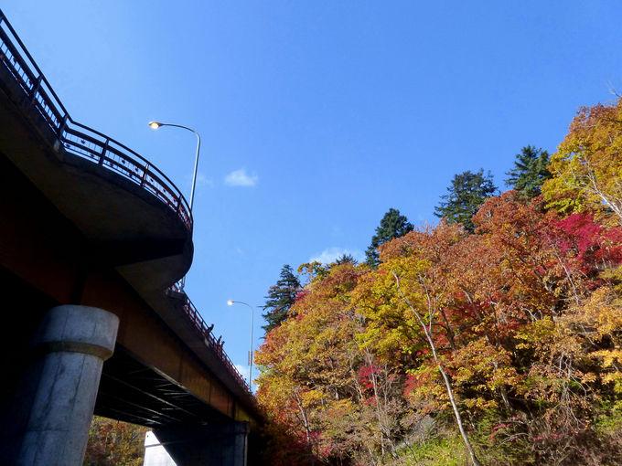 道道117号線の橋の上から眺める紅葉が素晴らしい!