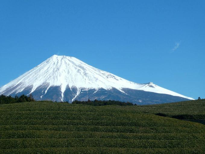 これぞ見事な茶畑と富士山の絶景!「大淵笹場」