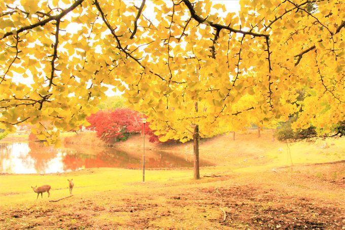 秋の正倉院展、紅葉の穴場スポット「大仏池」もおすすめ!素敵な大人の「奈良旅」を満喫