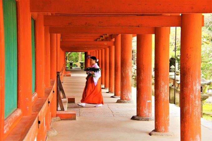 奈良公園に浮かぶ朱色の社殿!世界遺産「春日大社」