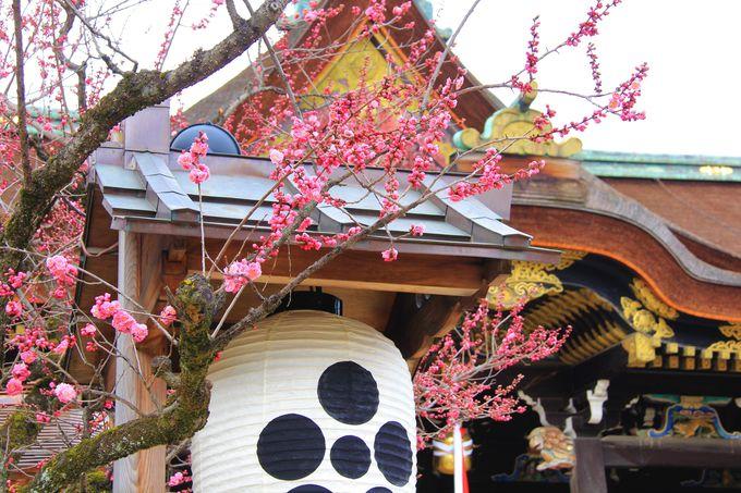 北野の天神さん、京都・北野天満宮