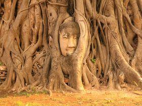 木の根に覆われた仏頭!アユタヤ遺跡「ワット・マハタート」