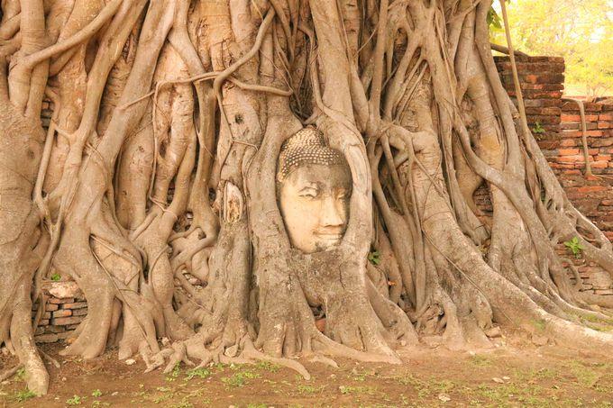 """アユタヤ遺跡の人気観光スポット!木の根に覆われた""""奇跡の仏頭"""""""
