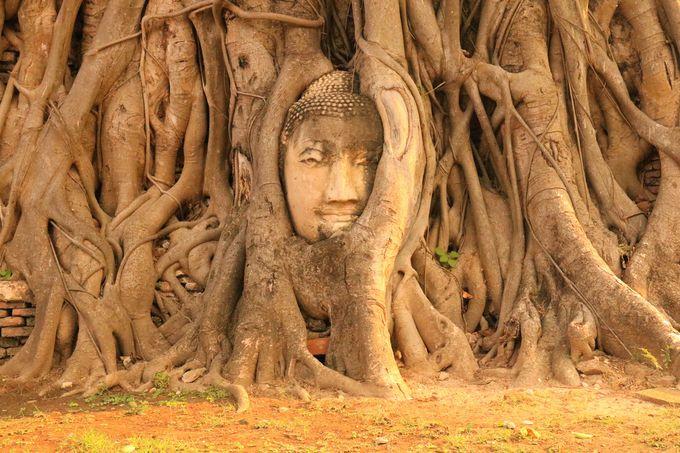 木の根で覆われた仏頭!「ワット・マハタート」はおすすめ