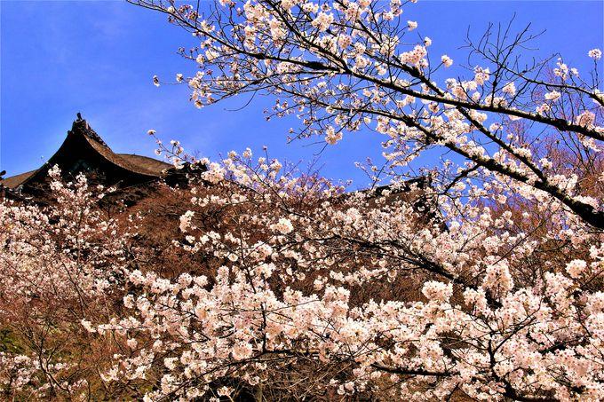 """""""清水の舞台""""は絶景の桜の名所!京都「清水寺」"""