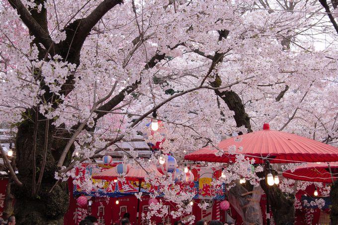 平野神社の花見茶屋は予約がおすすめ!席料や持ち込み料金などの確認も