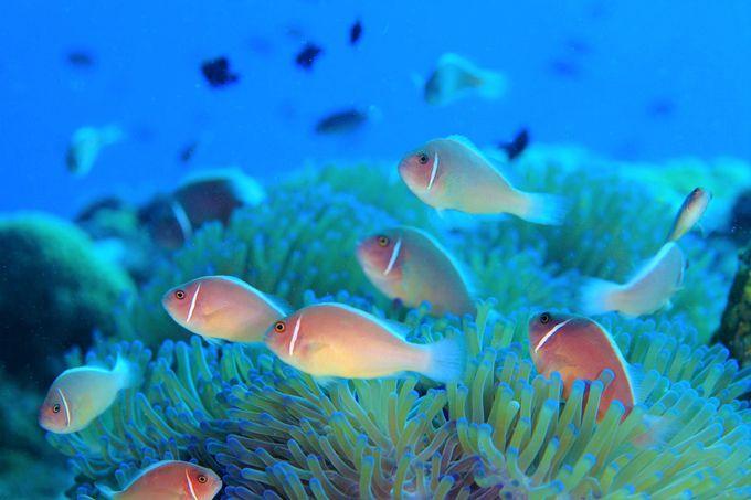 ダイビングツアーで人気!タオ&ナンユアン島のベストシーズンは?