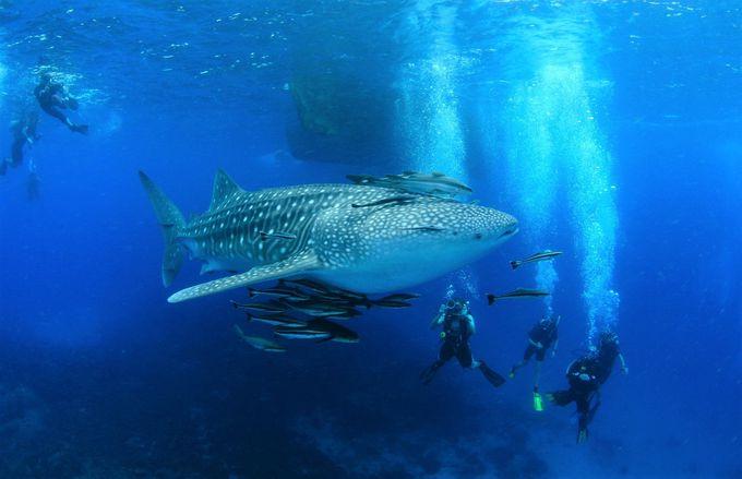 タオ島の観光おすすめ!ダイビングツアー&ライセンスの取得