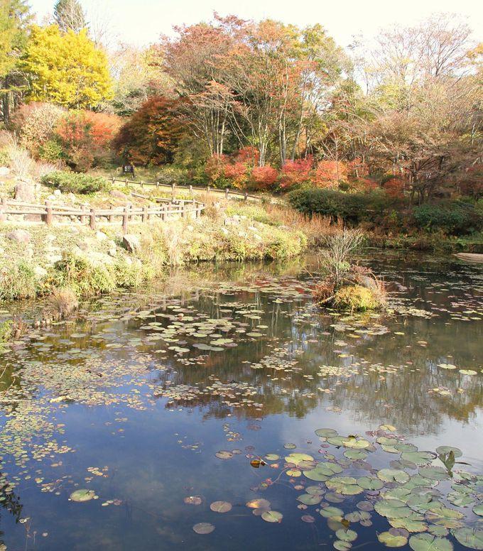 心を癒してくれる風景に出会える場所『六甲高山植物園』
