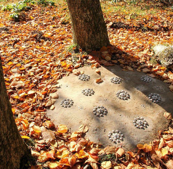 猫の足跡のような不思議なアート。降りそそぐ秋の木漏れ日が軽やか