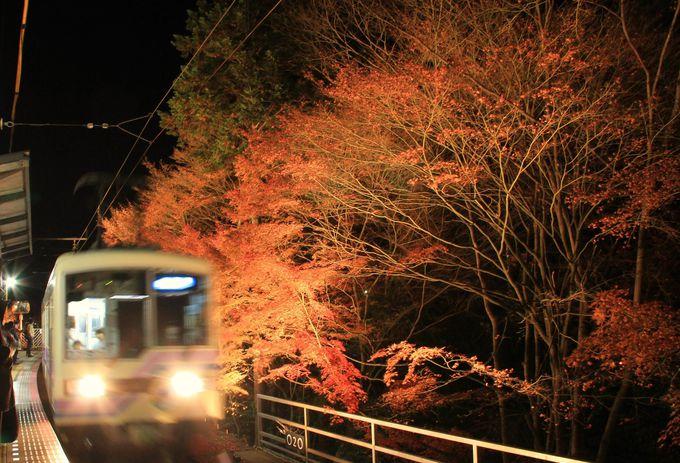 沿線の紅葉もライトアップ!おすすめは「もみじのトンネル」【叡山電車】