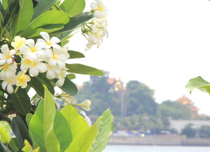 花が美しい海浜公園の前に浮かぶ「ロイ島」
