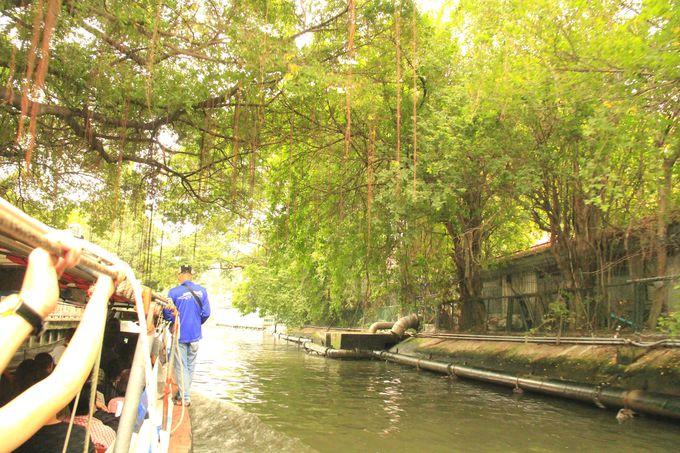 青々と茂ったジャングルを行く!バンコクの観光スポット巡りに便利
