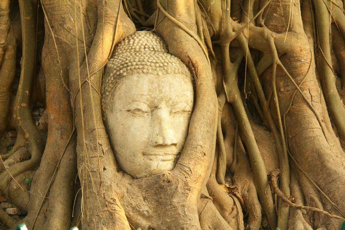 落ちた首が空中に!今もアユタヤを守る神秘の仏像「ワット・マハタート」