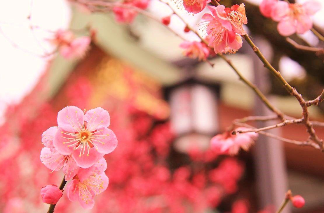 春な忘れそ!道真公・飛梅伝説の京都「北野天満宮」
