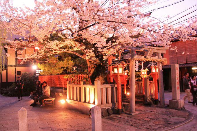 """""""祇園のお稲荷さん""""も、色鮮やかにライトアップ"""