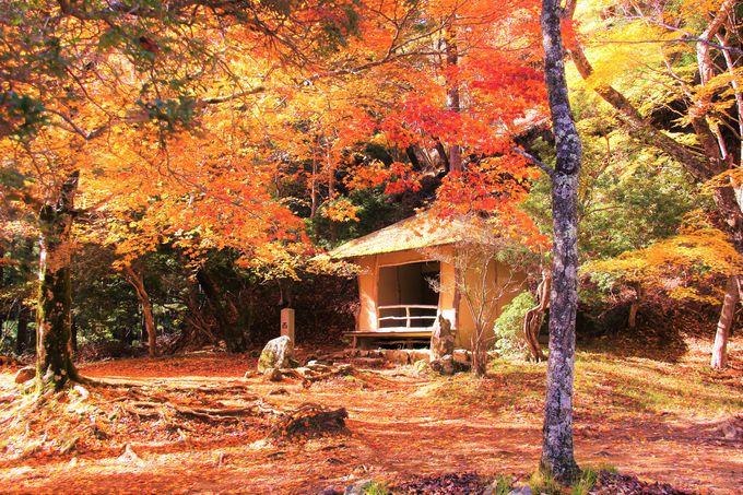 心くすぐる秋の哀しみ…紅葉に埋もれる「西行庵」